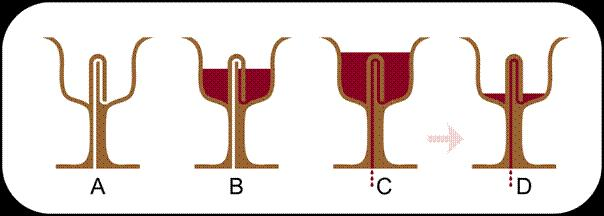 Paharul (cupa)  lui Pitagora