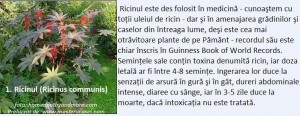 1-Ricinul